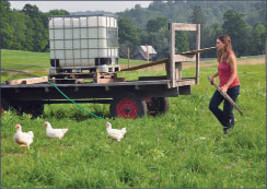 Norah Lake of Sweetland Farm, managing some of her chickens