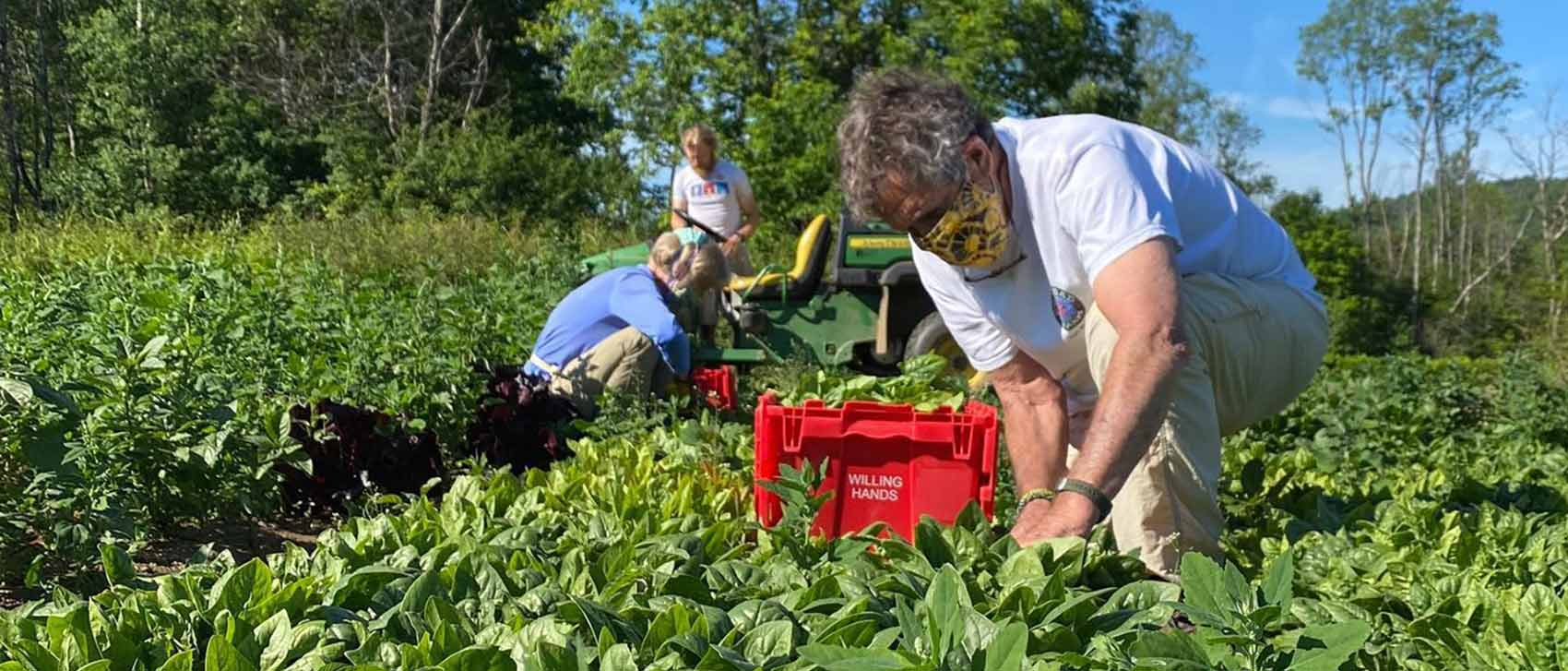 Milt & Carolyn Frye and Bob and Jane Greenberg (not pictured) volunteered in the first glean at Crossroad Farm in mid-June harvesting 100+ pounds of spinach for WH recipient organizations!