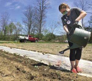 Emma Bippart-Butler watering rows of brassicas (such as cabbage, kale, broccoli, cauliflower) during a May volunteer work session at the Willing Hands Garden at Cedar Circle Farm & Education Center in East Thetford, VT.